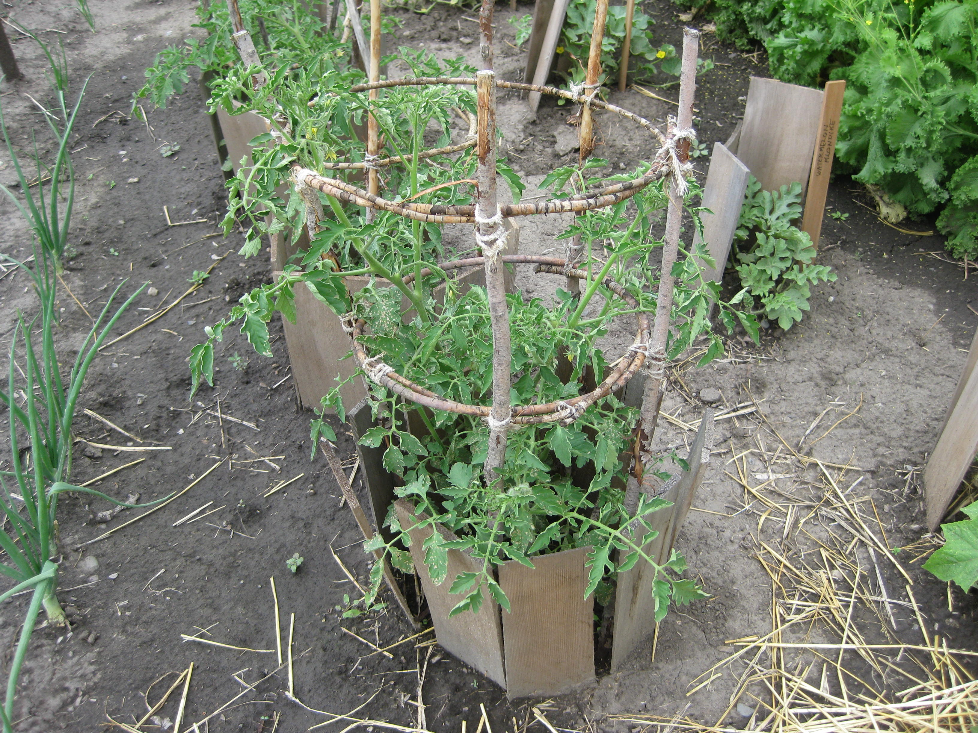 Handmade Tomato Cages From Michigan To Montana